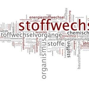 Stoffwechsel anregen - Bauch.de