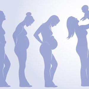 Wachstumsverlauf des Bauches in der Schwangerschaft