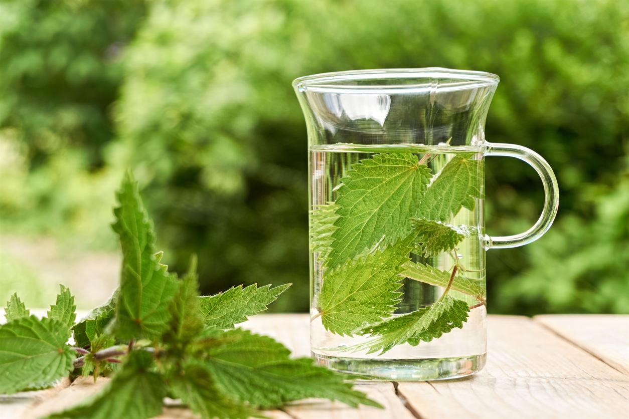 Grüner Tee zum Abnehmen des Bauches ist