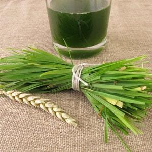 Weizengras als Saft
